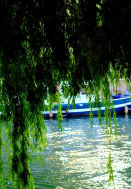 L'arbre, qui rêve de l'été