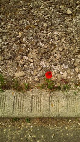 Une fleur en ville...