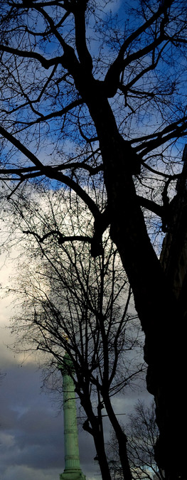 L'arbre de la Révolution