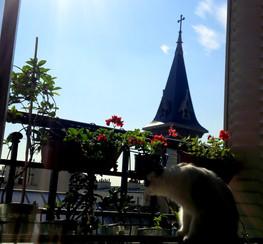 Un chat, qui aime Paris