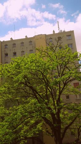 L'arbre urbain, qui se relève
