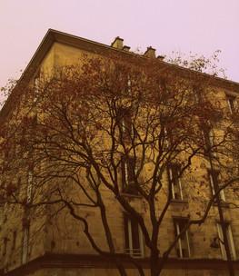 L'arbre prétentieux