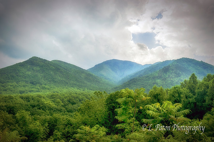 Great Smoky Mountains Forest 3