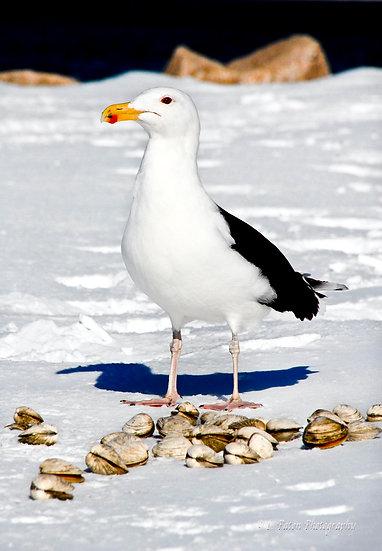 Winter Sea gull