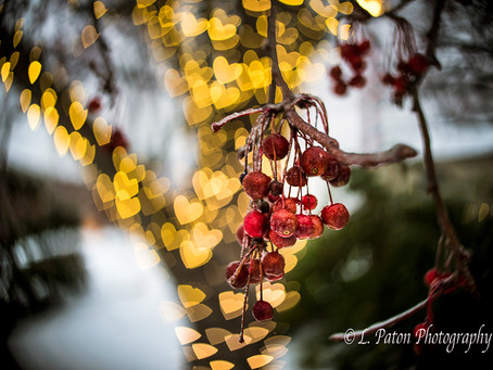 Tips and Tricks for photographing holiday Lights