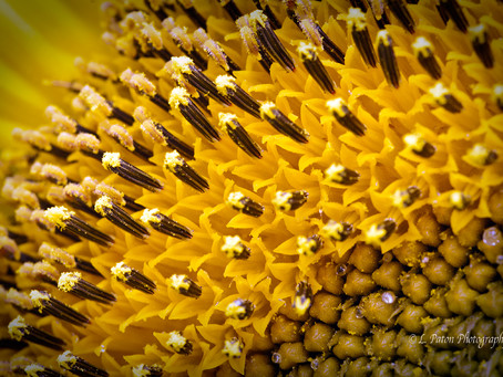 Tips for getting started in macro photography