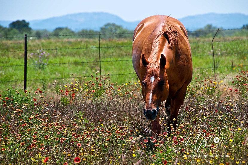 Horse in field of wildflowers
