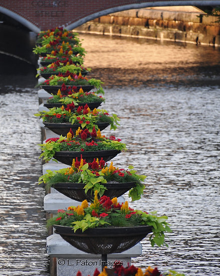 Flowers in the Canal