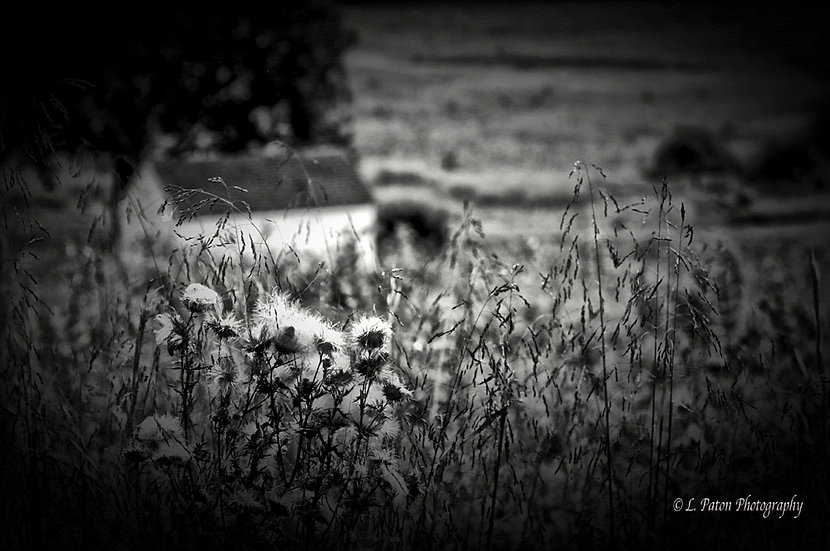Beyond the Meadow