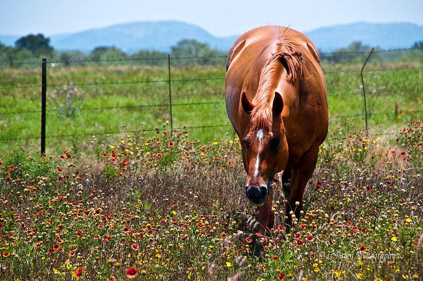 Horse in Wildflowers