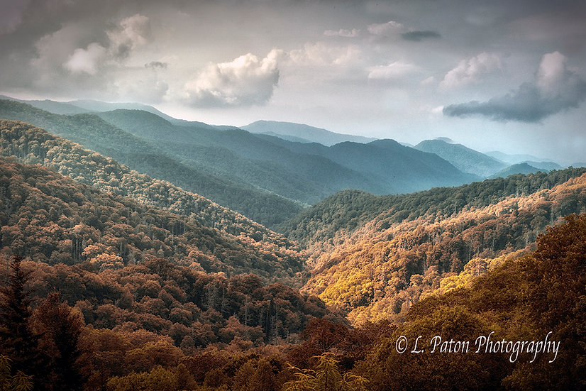 Great Smoky Mountains Forest