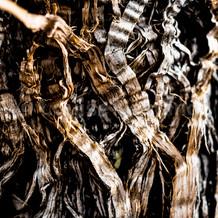 Twig Hair