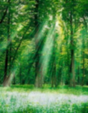 forest_1.jpg