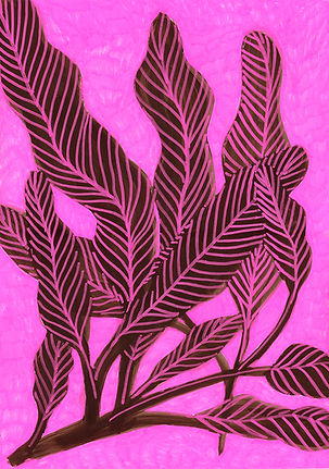 planta 8 low.jpg