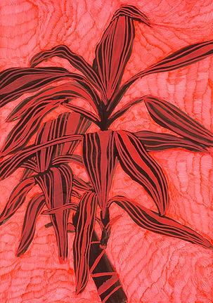 planta 5 low.jpg