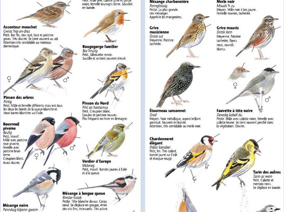 oiseaux jardins.jpg