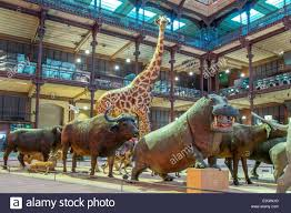 Musée national d'histoire naturelle de Paris