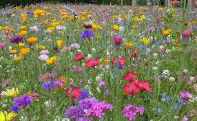 prairies fleuries