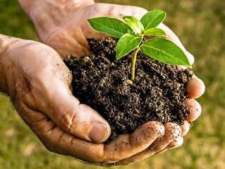 Etude Phytosanitaire - Parc de la copropriété : rapport