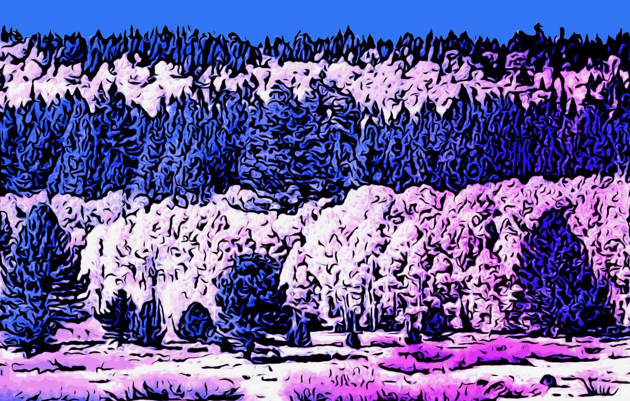 Aspens in Blue by Laurie Lehmann