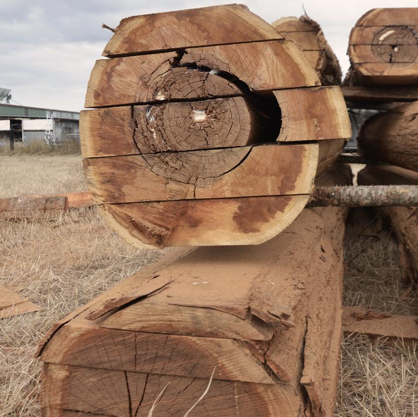Stacks of Bunya Pine
