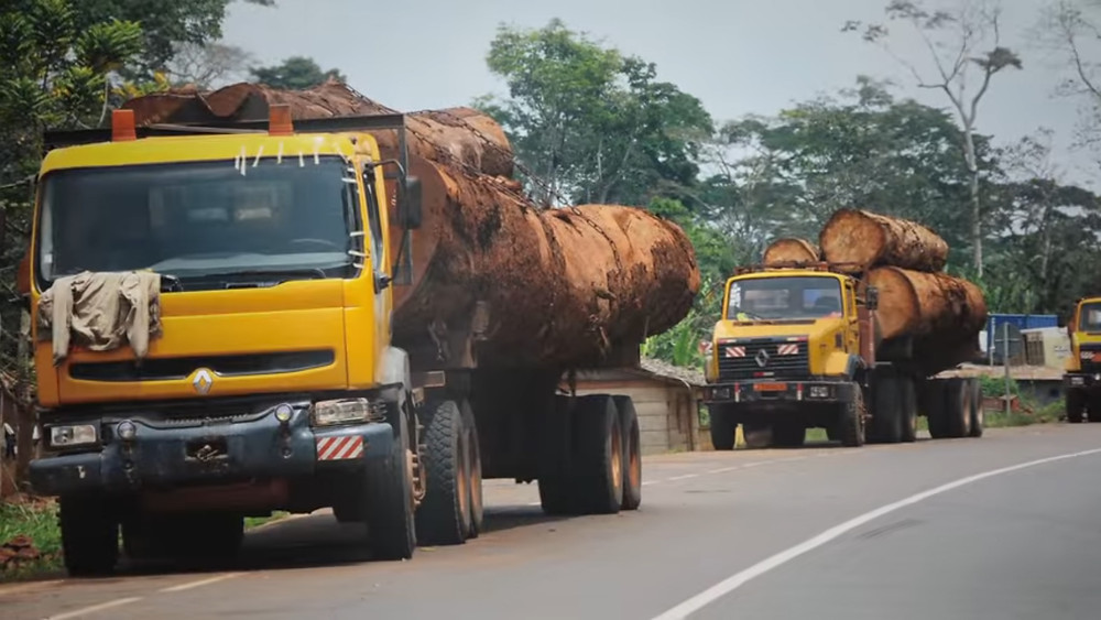 trucks carrying huge felled trees