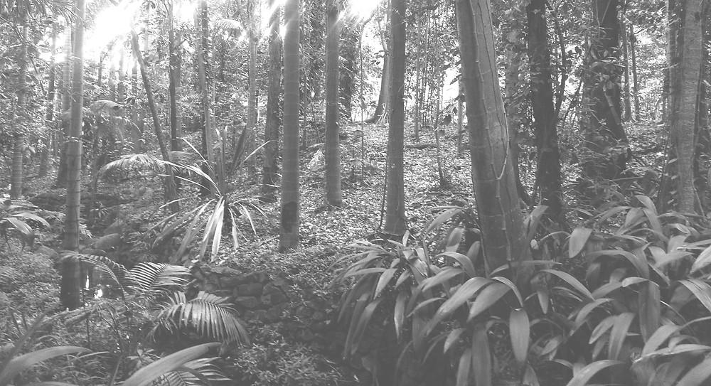 Australian rain-forest trees