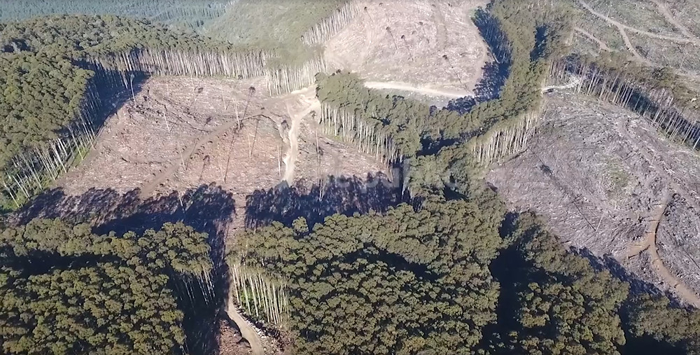 clear cut forest is central highlands of victoria
