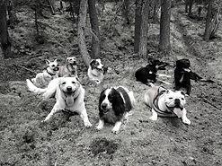 Dog Training Penticton, Dog Training Summerland, Dog classes