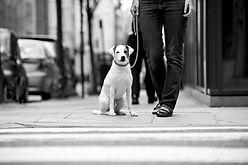 Puppy Class Penticton, Puppy Class Summerland