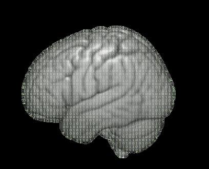 brain_lighter2.png