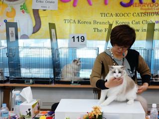 TICA CAT SHOW (2013.11.10)