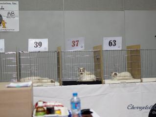 CFA CAT SHOW (2014.05.04)