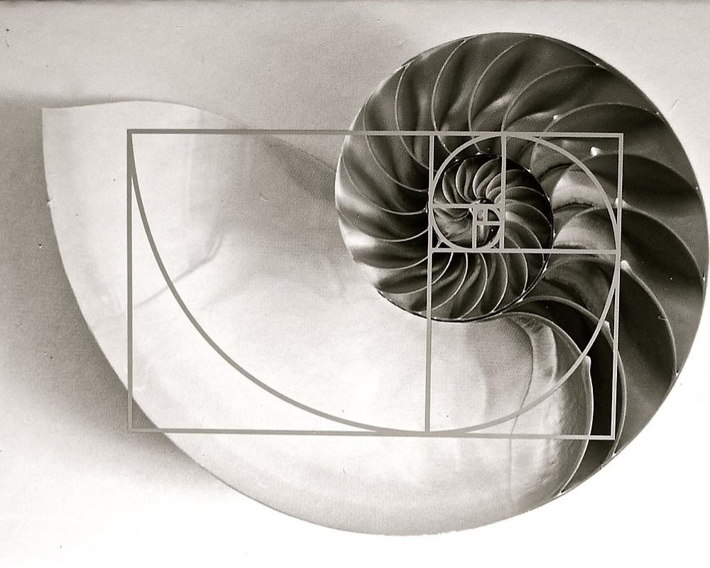 Fibonacci in trading, fibonacci spiral, fibonacci occuring in nature, seashell, mathematical symmetry