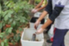 Composting Bins.JPG
