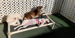Small Dog Daycare Outdoors