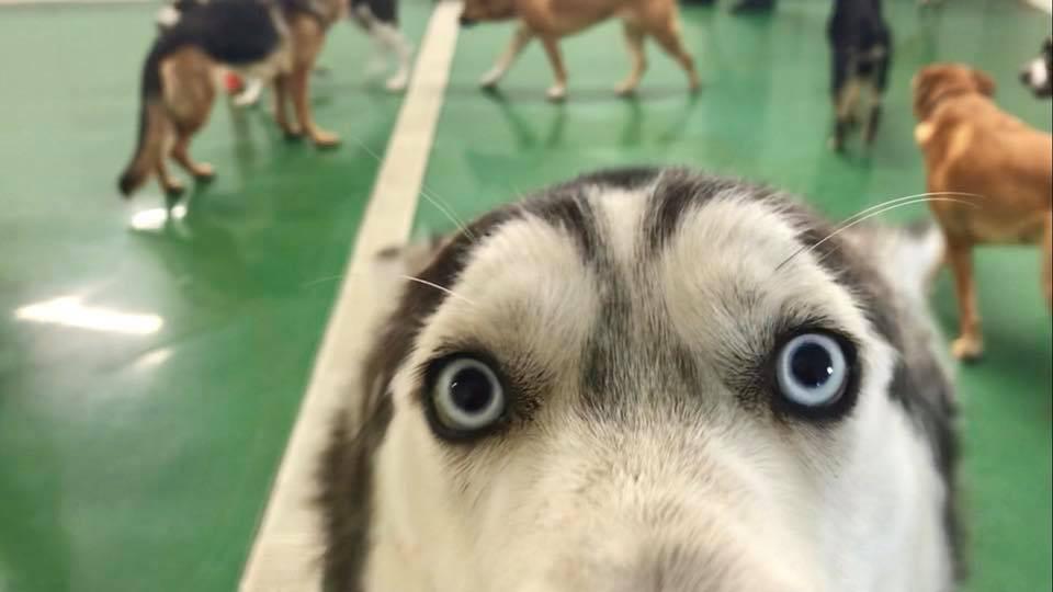 Big Dog Daycare Indoors