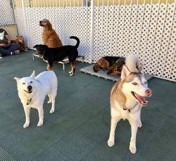 Big Dog Daycare Outdoors