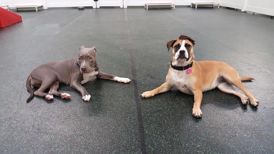 Skye and Jill.jpg