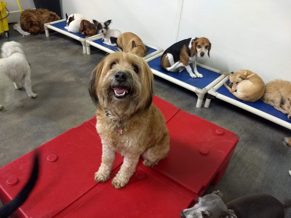 Small Dog Daycare