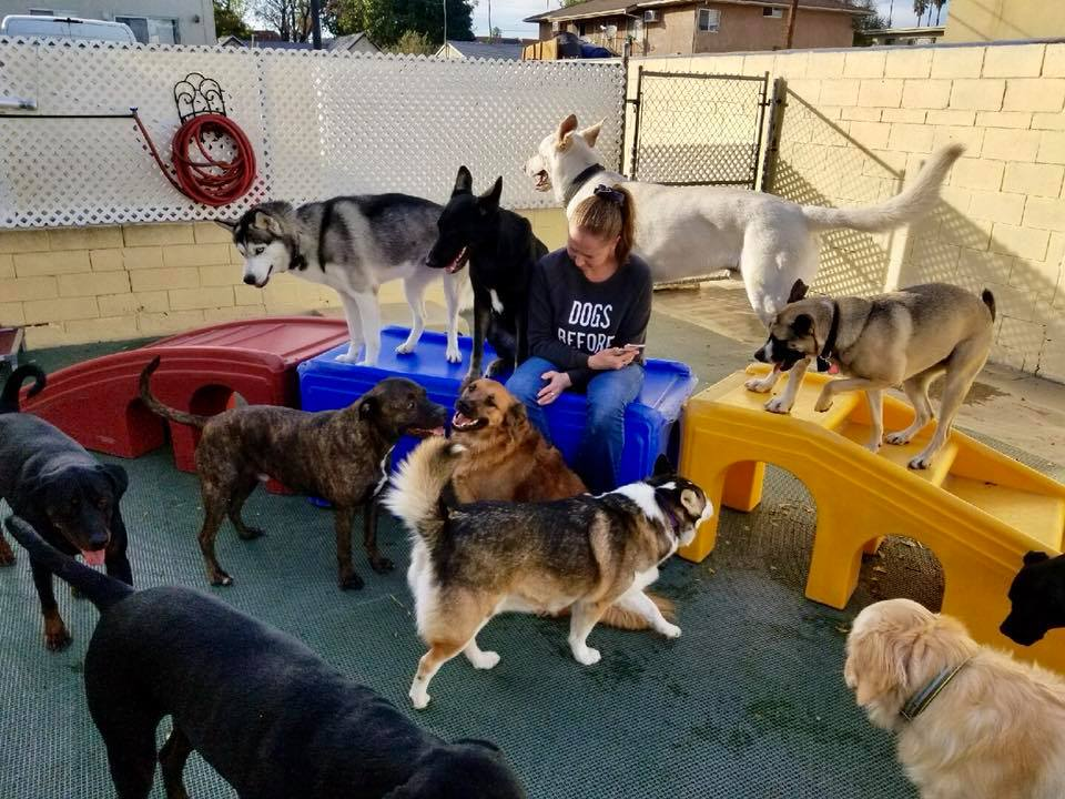 Big Dog Daycare Outdoors