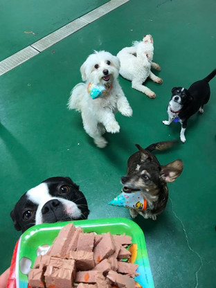 Small Dog Daycare Indoors