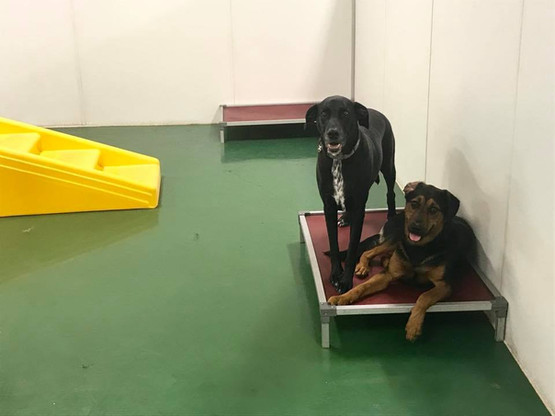 Big Dog Daycare Indoors