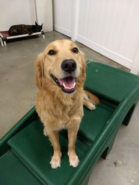 Big Dog Daycare