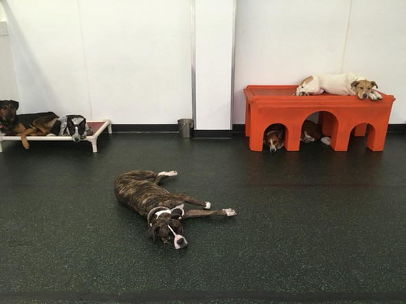 Sleepy pups.jpg