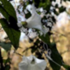 flower image for website.JPG