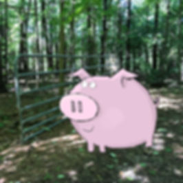 pig at gate L Stein flat.jpg