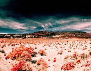 desert  hUntitled-1.jpg