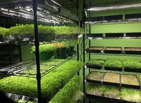 Indoor Organic Gardens of Poughkeepsie