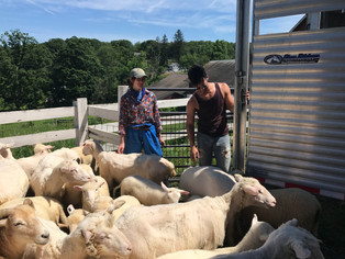 GLYNWOOD APPRENTICES SHOW PASSION FOR HUDSON VALLEY FARMING